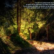 Fond d'écran chrétien - forêt